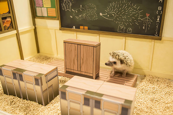 hedgehogcafe MG 9299